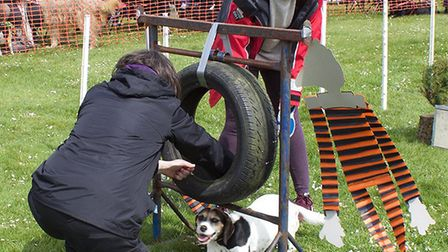 I'm trying! Overstrand dog show and Guide Dogs for Blind. Pictures: Supplied by Bruce Stratton