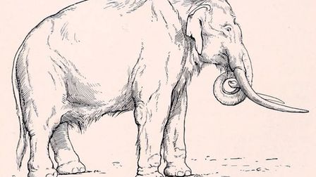 An artist's impression of the southern mammoth (Mammuthus meridionalis). Image: PUBLIC DOMAIN