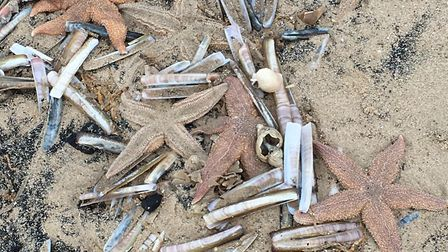 Starfish washed up on the beach at Holme on New Year's Eve. Photo: Lisa Bromley