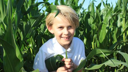 Nine-year--old William Fincher having fun at JR's Maize Maze, which opened at North Walsham this wee