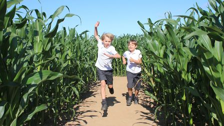 Fun for all the family at JR's Maize Maze, which opened at North Walsham this week.Photo: KAREN BETH