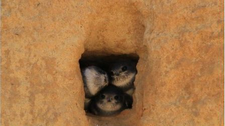 Magge Wilcox has launched a petition to secure the future of Bacton's sand martins. Pictures: Maggie