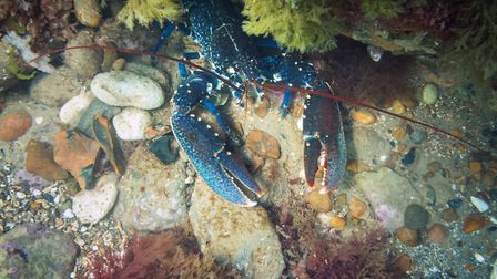 Sea life seen along the Sheringham Snorkel Trail. Picture: christaylorphoto.co.uk