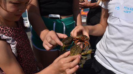 Part of the action at the World Crabbing Competition 2019 in Cromer. Picture: Dave 'Hubba' Roberts