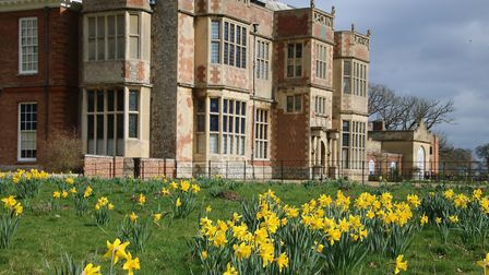 Spring daffodils in front of Felbrigg Hall. Picture: Martin Sizeland