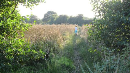 The footpath across Honing Common. Picture: Open Spaces Society