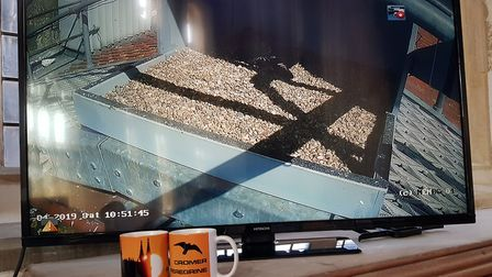 Chris Skipper, from Norwich, has produced a book, The Story of the Cromer Peregrines. View shows the