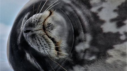 Chillin, by Lauren Griffiths of the North Norfolk Photographic Society competition. Picture: Lauren