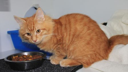 Six-month-old Syrup, who was taken in by the North Norfolk Cats Lifeline Trust after being found aba