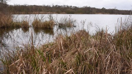 The majority of fish could be removed from Hoveton Great Broad. Picture: DENISE BRADLEY