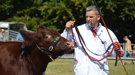 Livestock on display at the 2019 Aylsham Show. Picture: Chris Hill
