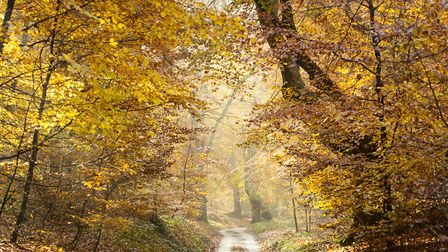 A rural pathway in north Norfolk. Picture: Chris Taylor