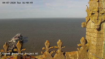 A view over Cromer from the top of the parish church - now the perch of a couple of peregrine falcon