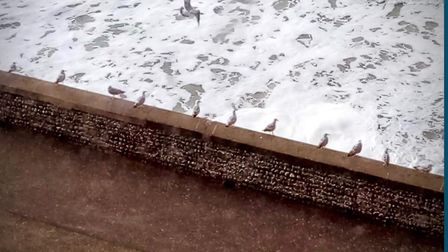 Joy White took this photograph of social distancing seagulls from her flat window in Cromer. Picture