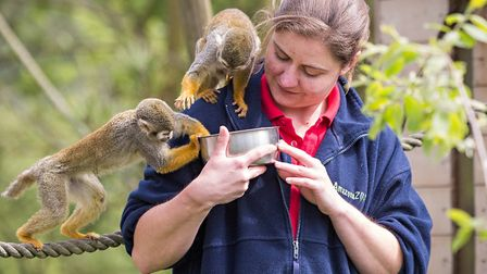 Imogen White, manager of Cromers Amazona Zoo, feeding a squirrel monkey. The zoo is reopening the we
