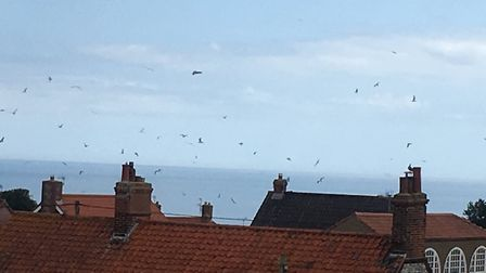 Hundreds of sea birds were seen flocking over Overstrand in north Norfolk. Picture: Jim Keenan