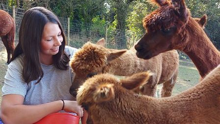 Beckie Farrow, who runs the Bumblebarn glamping and alpaca farm in Sheringham, at feeding time. Pict