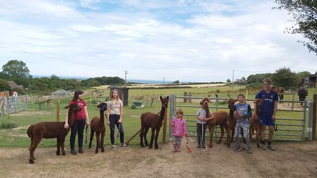 Young visitors with alpacas at Bumblebarn in Sheringham. Picture: Bumblebarn