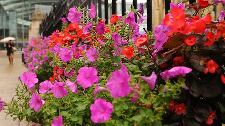 Floral displays by Friends of Norwich in Bloom, part of the city's entry for the Anglia in Bloom com
