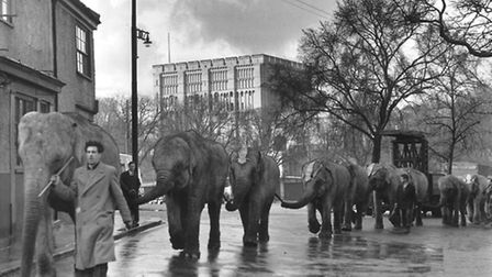 Events - FairsThe circus arrives in Norwich, the elephants parading through the city's streets. Th