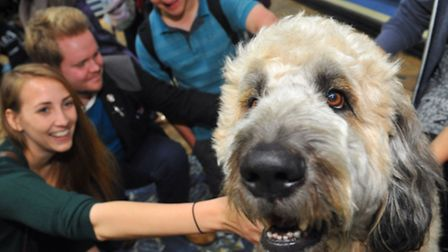 Pets As Therapy dogs getting plenty of attention from students at the University of East Anglia. PAT