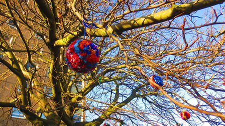 Pom Pom tree near Normandie Tower, Norwich. Picture: Kate Royall