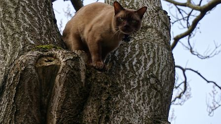 Mac the cat, who has gone missing from Park Lane