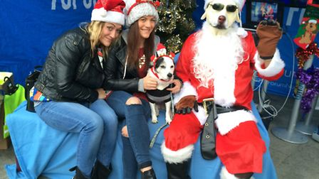 Santa's grotto for dogs. Picture by The Forum Trust