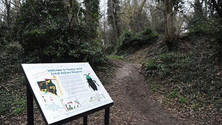 Danby Wood nature reserve. Picture: DENISE BRADLEY