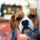 Dogs can help children become more confident readers. Picture: Adam Davy/PA Wire.