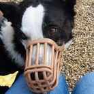 All is not lost - crisps fit nicely through a muzzle. Picture: Becky Rushton