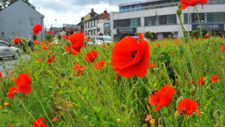 Norwich with a splash of floral colour on the day judges came to the city for the Communities in Blo