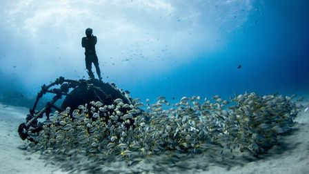 The Ocean Film Festival World Tour is at the UEAs Lecture Theatre 1 in Norwich on October 7. Photo: