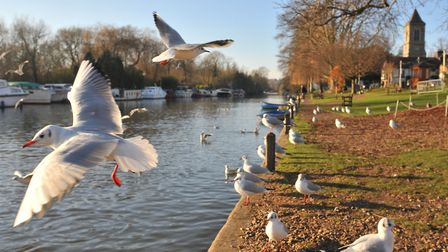 Thorpe River Green, Norwich. Picture by SIMON FINLAY.