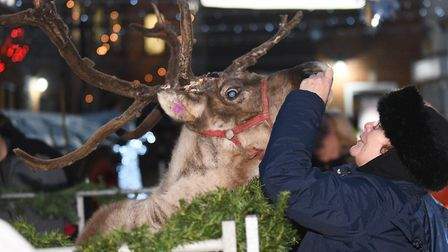 A lady feeding the Reindeer before the Christmas lights were switched on in Swaffham last year. Pict