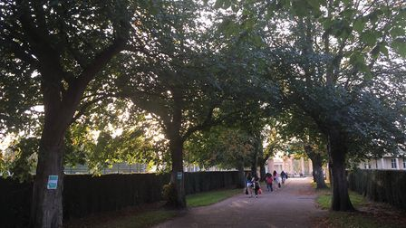 The avenue of trees in Eaton Park which were cut down. Pic: Archant.