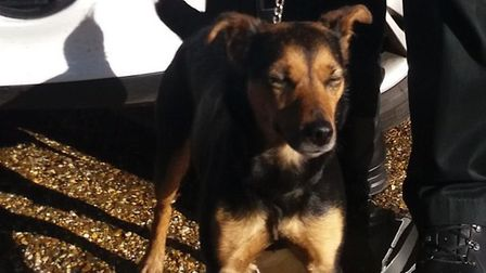 The missing dog found by police in Watton. Picture: NORFOLK POLICE