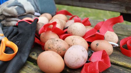 The chickens rehomed by Fresh Start For Hens previously worked on farms laying eggs. These eggs were