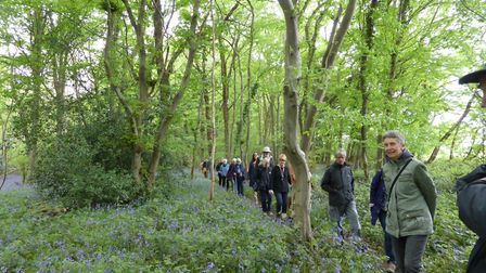 Bluebell walk in Lower Wood, Ashwellthorp.Picture; Anne Edwards