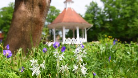 Spring flowers by the bandstand at Chapelfield Gardens. Picture: DENISE BRADLEY