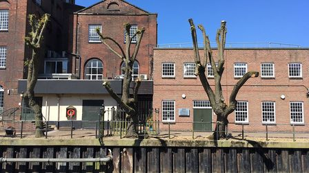 Weeping willows outside St James Mill in Norwich. Picture: Steve Downes