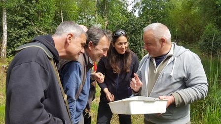 Volunteers learn to survey for the rare pond mud snail atStow Bedon Common's pingo ponds. Picture: F