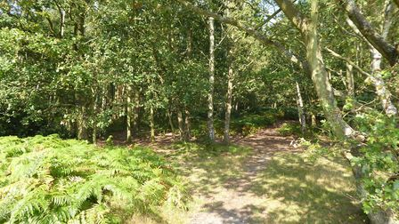 File photo of Mousehold Heath. Picture Jackie Hope.