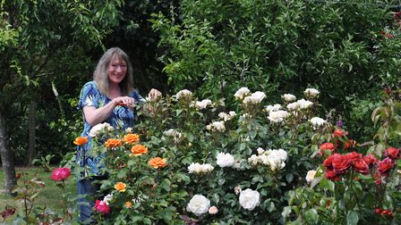 Rita Lake with her roses. Her garden will be open as part of the Watton Open Gardens and Yard Sale.
