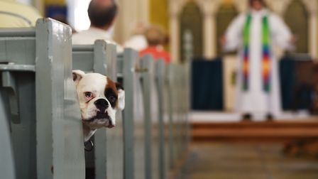 Pet service at Christ Church New Catton.Picture: ANTONY KELLY