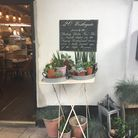 The exciting assortment of houseplants found outside the Warings Lifestore cafe. Picture: Michael Po