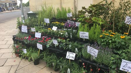 The charming selection of indoor (and outdoor) plants available at Gail's setup outside Clarks on Br