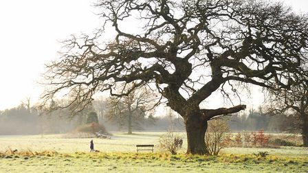 Dog walkers enjoying the frosty New Year's Day morning at Catton Park. Picture: DENISE BRADLEY