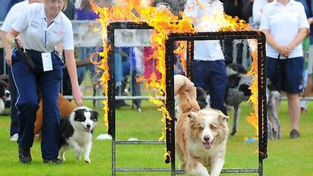 Main stage event at the dog show. Picture: All About Dogs