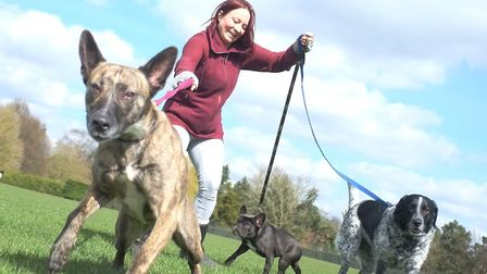 Nicola Drew from Wagtails with some of the dogs she cares for. Wagtails is a Norwich-based dog walki